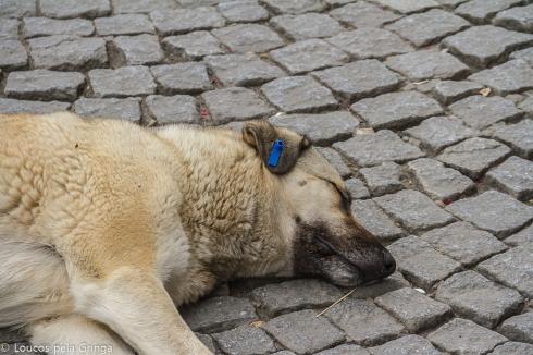 """Cachorros de rua também são muito frequentes. Mas repare na orelha desse... é uma numeração dada pela prefeitura! Em Istambul os animais de rua são """"etiquetados"""" e todos recebem cuidados veterinários e de higiene regularmente!!!"""
